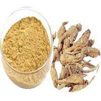 100% Natural Chinese Supply Angelica sinensis /Dong Quai root extract /Dong Quai extract ligustilide 1%