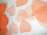 Skeleton Leaves in Natural and Plain Colors for Art and Crafts, Scrapbooking, Wedding Invites