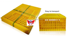 Automatic poultry farming machine egg collecting system for chicken
