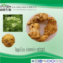 Competitive price angelica extract/angelica oil P.E/dong quai extract