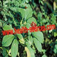Best cosmetic ingredients /natural plant extract / health product