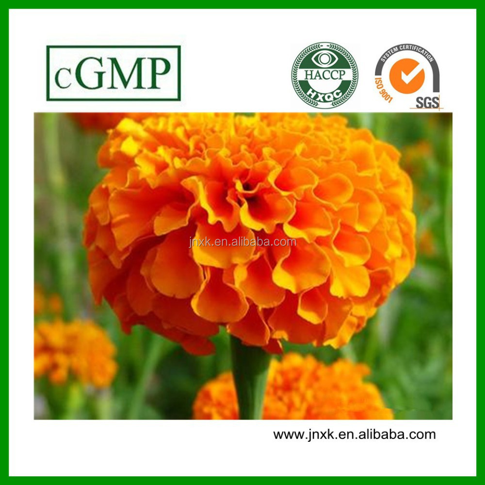 High Quality Lutein Powder(Marigold Plant Extract)