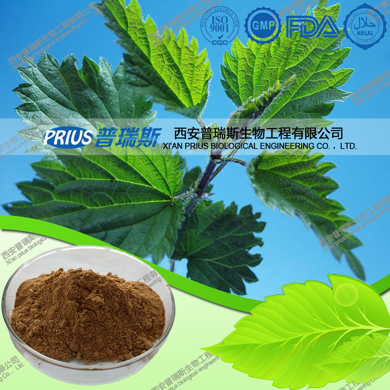 High quality pure nettle extract 0.8% sitosterol