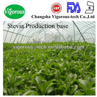 natural pure bulk Stevioside 80% stevia extract reb a