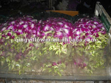 Good Quality Fresh Cut Dendrobium Red Orchid for Sale