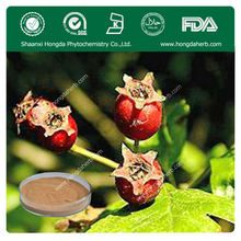 Natural Pure and High Quality hawthorn berry/leaf extract