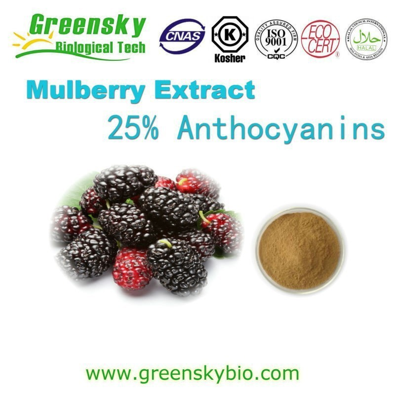 Hot Selling High Quality Mulberry Fruits Extract