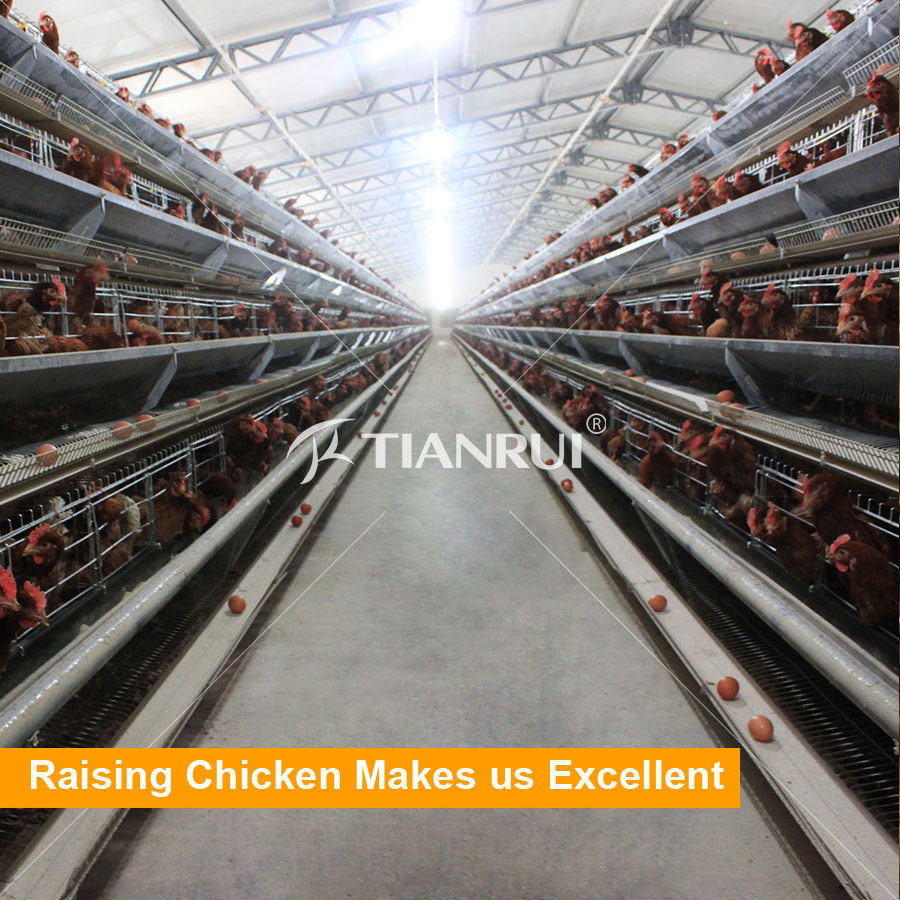 Tianrui Design Full Automatic Chicken Poultry Battery Cages for Bangladesh Farm
