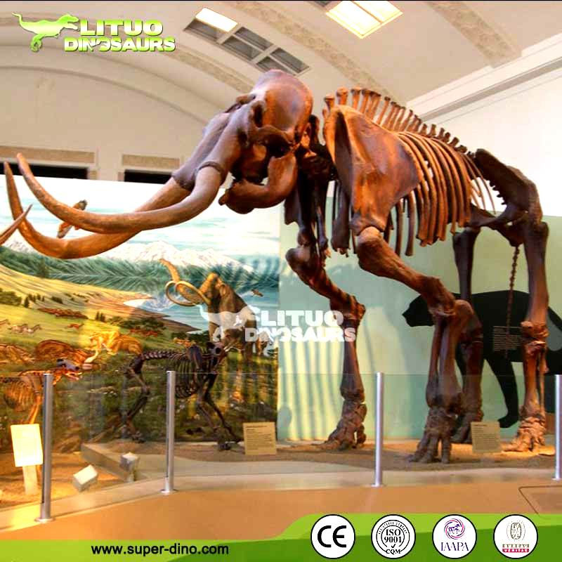 High Quality Animal Mammoth Skeleton for Sale