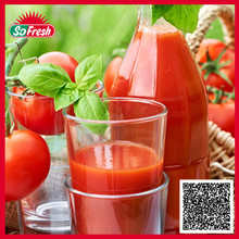 Chinese private label halal distributor tomato sauce raw material