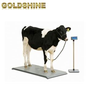 for pig Livestock Weighing Systems Heavy Duty Horse north texas scale animal weight floor scales