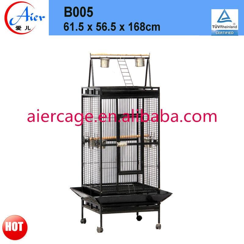 Factory supplier best pet bird