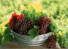 factory supply 98% organic grape fruit seed extract