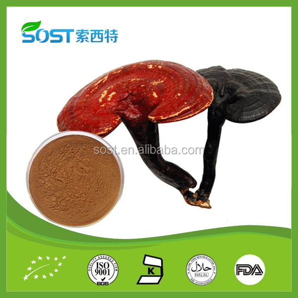 Hot Selling And Natural Lucid Ganoderma Extract