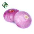 Chinese fresh red onion supplier