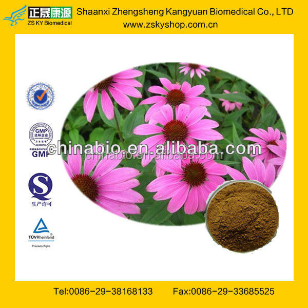 GMP Certified Manufacturer Supply Echinacea Herb Extract