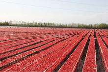 Sulphured Sun Dried Tomatoes From Xinjiang