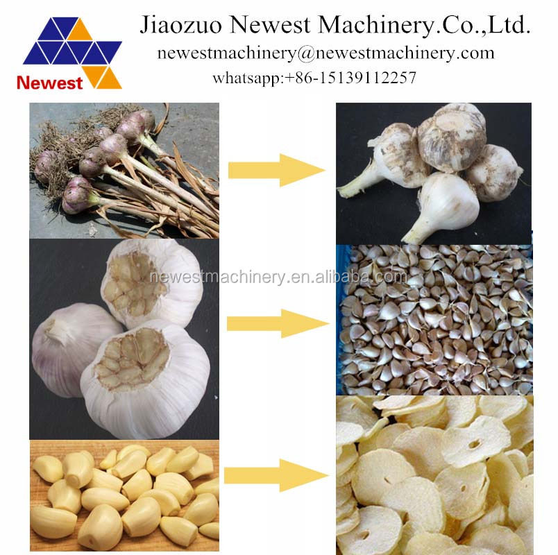 Professional garlic onion peeling machine/ginger garlic cutting machine