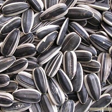 2017 Raw Sunflower Seeds 601 Inner Mongolia Bulk Bird Seedeastdown sunflower seeds