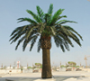 6m height artificial palm tree plants canada artificial date palm tree for garden