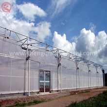 Hot selling 12m multi span plastic greenhouse film fastening for tomato