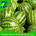 High sprouting rate watermelon seed for cultivating