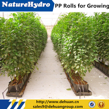 2016 Low Cost PP Rolls Products Planting Vegetable With Soil