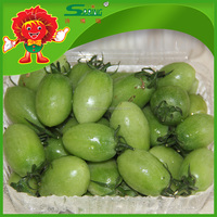 Top grade fresh cherry tomato market price for green cherry tomatoes