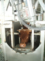 above 100 cattle/day/shift slaughtering machine turnkey project for abattoir slaughter house