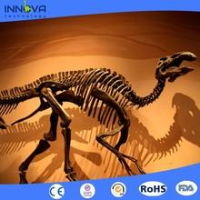 Innova- 2017 resin dinosaur fossil model dinosaur skeleton for museum
