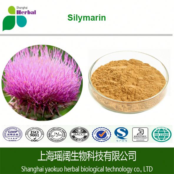 Healthcare Supplement Ingredients Silybum marianum 80% Silymarin 30% Silibinin Milk Thistle P. E