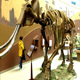 Zigong China supplier fossil skeleton museum animal fossil for sale