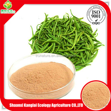 Best Selling Green Tea Powder/Instant Beverage Green Tea Extract/Polyphenol 98% with Top Grade