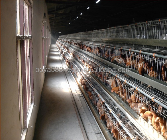 Over 15 lifespan automatic poultry farming cage for chicken, egg layer, rabbit, quail and pigeon