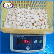 Frozen shrimp and seafood with low price