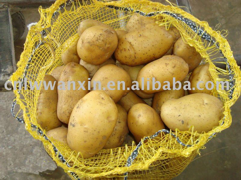 fresh holland potatoes