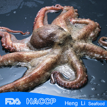 Live octopus for sale wholesale