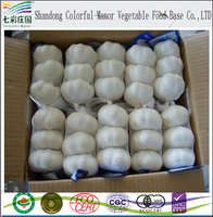2017 new garlic and fresh garlic price per ton in China