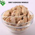 Whole Dried Ginger for Sale