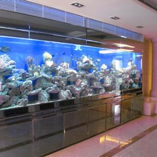 ultra transparent massive 19mm ultra thick tempered glass fish tanks