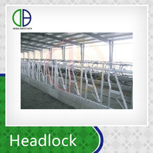 2016 Cattle farm use cattle stall cattle headlock