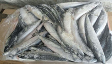 200-300g frozen pacific mackerel scomber japonicus W/R best price from China