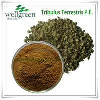 tribulus terrestris extract supplier/tribulus terrestris 90% bulk powder/high quality tribulus terrestris extract powder
