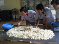 cashew nut, cashew kennel certificated for ISO9001:2008
