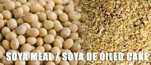 Soybean Deoiled Cake / Soya DOC / Soybean Meal