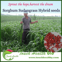 2016 Touchhealthy supply Gaodan Grass Seeds Sorghum Sudan Grass Seeds Sorghum Hybrid sudan grass Seeds For Growing