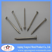 building nails,common nails, galvanized nails