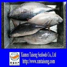 pacific seafood fish of bonito for sale