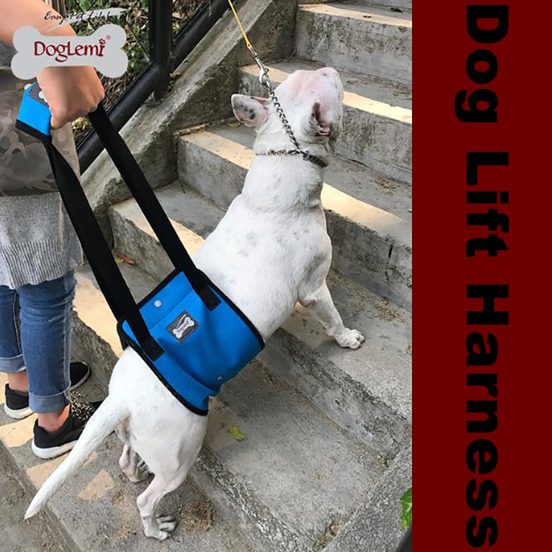Dog leg walking helper assist ancillary leashes products for old disability dog