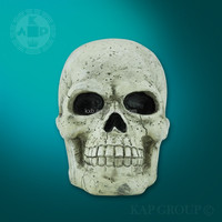 Medical anatomical skull model,plastic skull model for sale